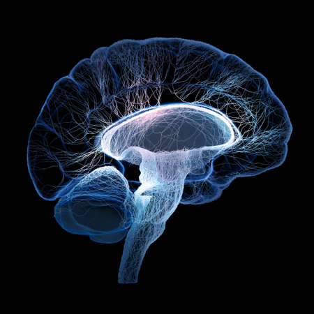 mente humana: El cerebro humano se ilustra con peque�os nervios interconectados - 3d