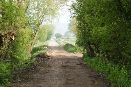 drove: Cattle drove Nailsea Wall Somersetshire Stock Photo