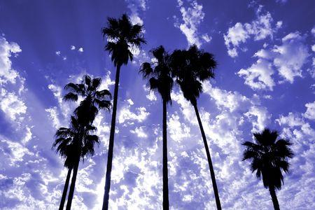 palm desert: Alti alberi di palma staglia contro un drammatico cielo.