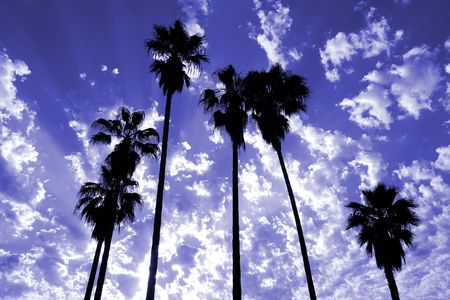 oasis at sunrise: Tall palm trees silhouetted against a dramatic sky. Stock Photo