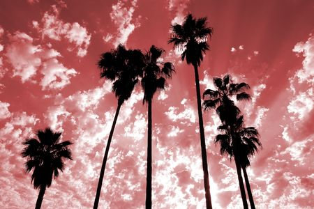 palm: Tall palm trees silhouetted against a dramatic sky. Stock Photo