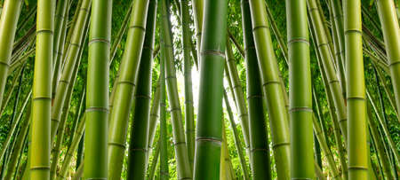 bambou: Bamboo Jungle Banque d'images