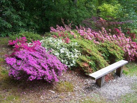 exbury: a bench & a garden at Exbury Gardens (UK)