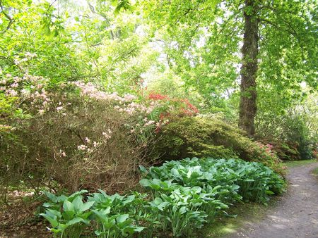 exbury: a garden walk at Exbury Gardens (UK)