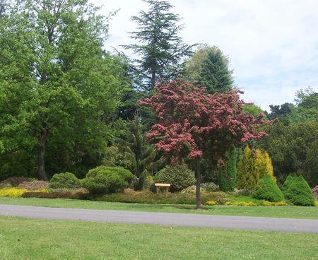 exbury: garden with path at exbury gardens (UK) Stock Photo