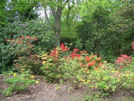 exbury: garden at Exbury Gardens (UK), in spring, with a bed of azaleas and trees.