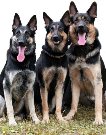 devoted: Security elite dogs
