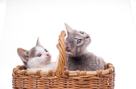 Funny kitten in studio on light background photo