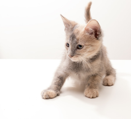 Little funny kitten in studio on light background photo