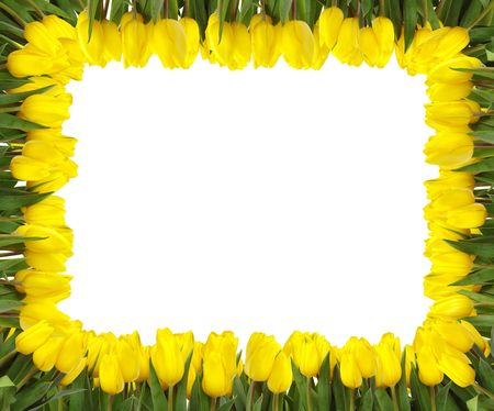 A frame of bright yellow tulips on white background Stock Photo - 825148