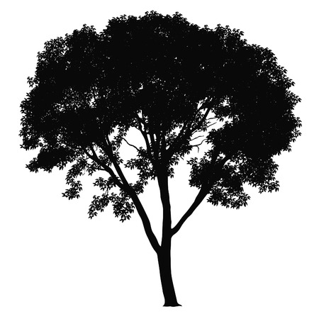 Tree silhouette on white background. illustration. Vector