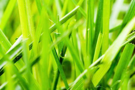 Macro of grass photo