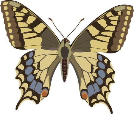 papilio: Swallowtail