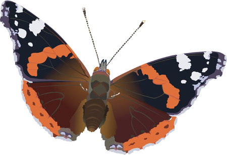 red admiral Stock Vector - 421123