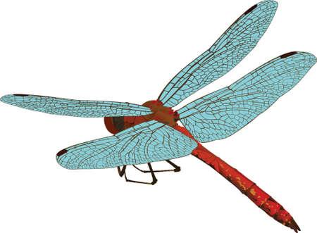 fleischfressende pflanze: Dragonfly
