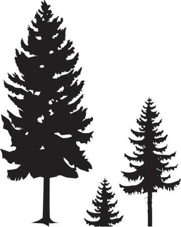 picea: spruce silhouette