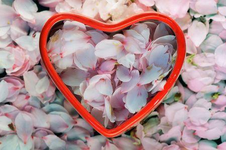 subtlety: Petals of almonds