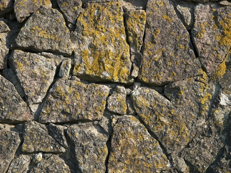 weathering: Organic weathering