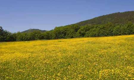 daisys: Mountain field of daisy�s in summer  Stock Photo
