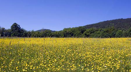 Mountain Meadow Stock Photo - 1007090