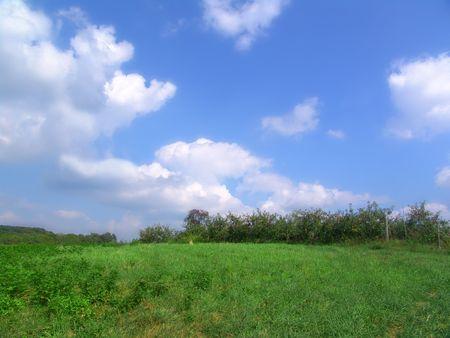open field  apple orchard