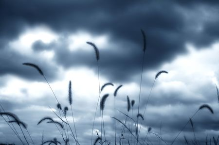 Grass Plumes and Clouds Stock Photo