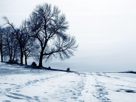 solace: trees in winter
