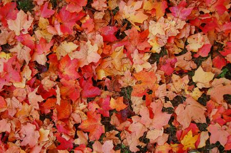 cluster of colorful autumn leaves Stock Photo