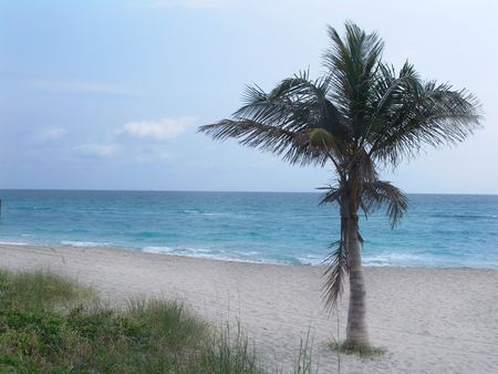 palm tree on Florida beach Stock Photo