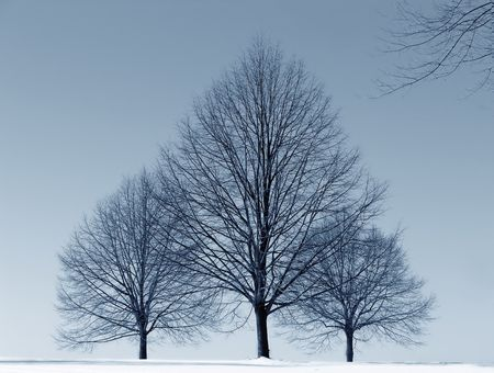 three trees in winter - snow