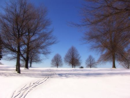 blustery: winter landscape - trees snow blue sky Stock Photo