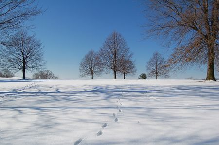 blustery: scenic winter landscape -  snow trees sky