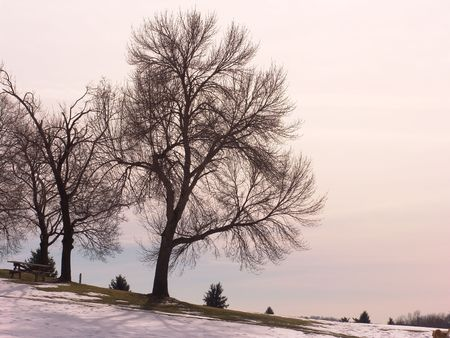 dusk pastel landcape - large tree Stock Photo - 339491