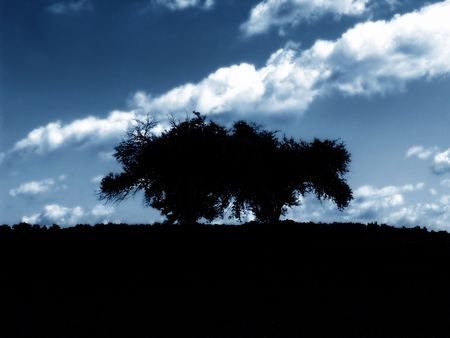 blustery: silhouette of trees in front of dramatic sky Stock Photo