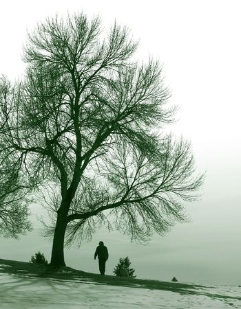 blustery: man walking beneath large tree Stock Photo