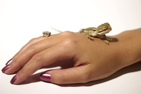 baby bearded dragon on womans hand photo