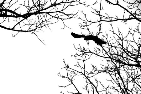 silhouette of bird flying off tree branches