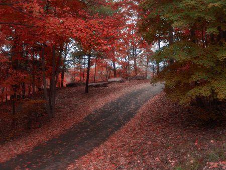 cutting through: path cutting through colorful autumn landscape