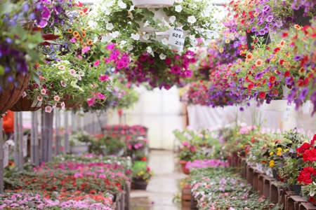 garden center: greenhouse full of colorful flowers