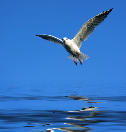 flying seagull over water photo