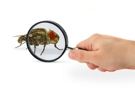 terrify: hand magnifying home fly isolated on white background