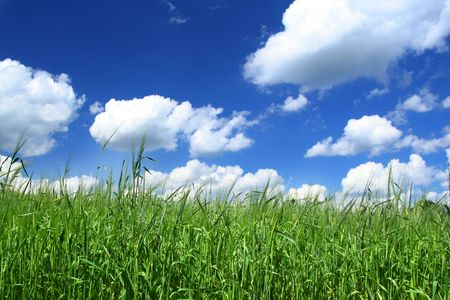 thickets: summer field with cloudy blue sky above, focus is set in foreground