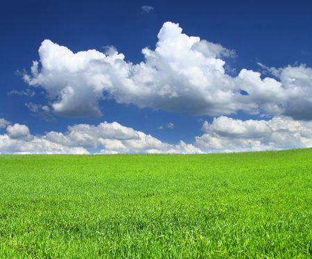 blissfull: beautiful green summer field with a few cumulus clouds