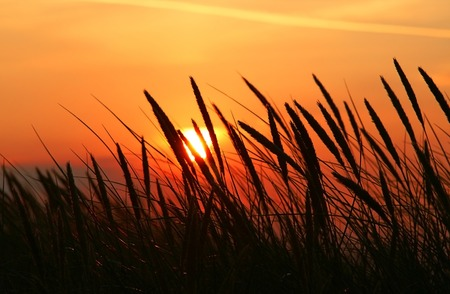 rushes: close-up of rushes with beautiful summer sunset in background Stock Photo