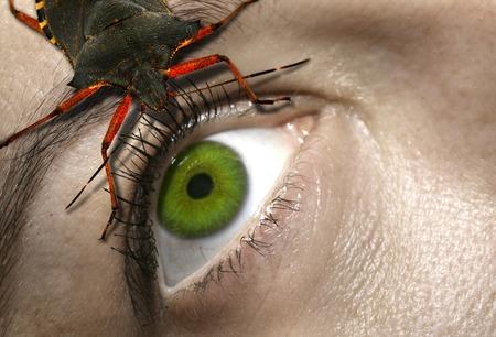 horrifying: eye to eye with a horrifying bug Stock Photo