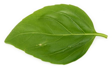 macro of a single basil leaf against white background