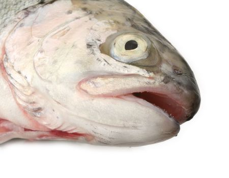 real macro of fish head against white background, gentle shadow in front, focus is set on the eye area Stock Photo - 2055951