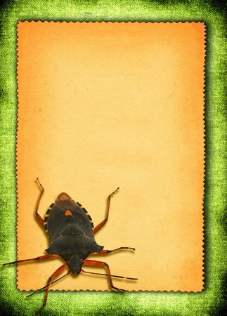 scabrous: torn out paper with bed-bug against green material background Stock Photo