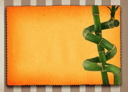 lucky bamboo background, large copy space for your content Stock Photo - 2183279