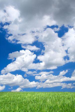 horrizon: meadow against summrer sky with cumulus clouds
